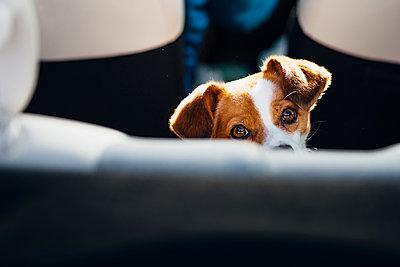 Watching dog - p300m1499466 by Jana Mänz