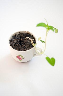 Little plant - p971m658906 by Reilika Landen