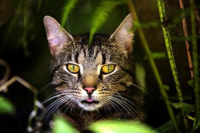 Katze unter Farn - p1221m1537781 von Frank Lothar Lange