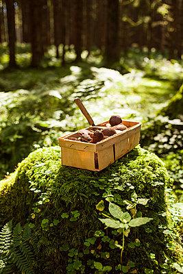 Korb mit Pilzen - p1386m1445761 von beesch