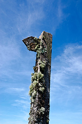 Wooden Mossy Signpost Against Blue Sky - p1562m2288019 by chinch gryniewicz