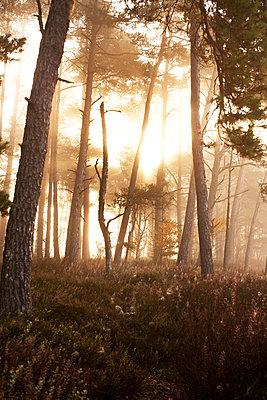 Sonnenschein im Nebel - p533m1194915 von Böhm Monika