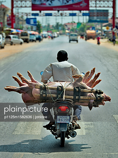 Transporting pigs on motorcycle - p1125m1582636 by jonlove