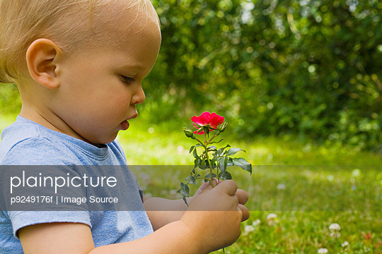 A baby boy holding flowers - p9249176f by Image Source