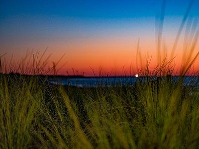 Dünen an der Ostsee - p1243m1553094 von Archer