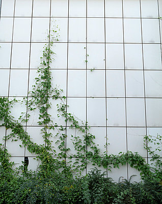 Climbing plants - p275m808086 by Franziska Klose
