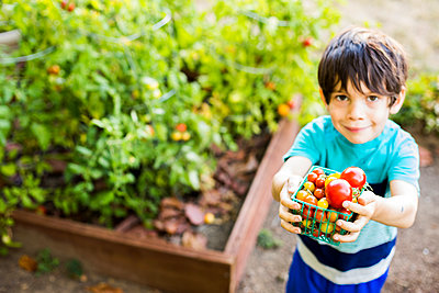Mixed race boy picking vegetables in garden - p555m1411241 by Adam Hester
