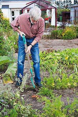 Senior man working in garden - p575m1074404f by Lina Karna Kippel