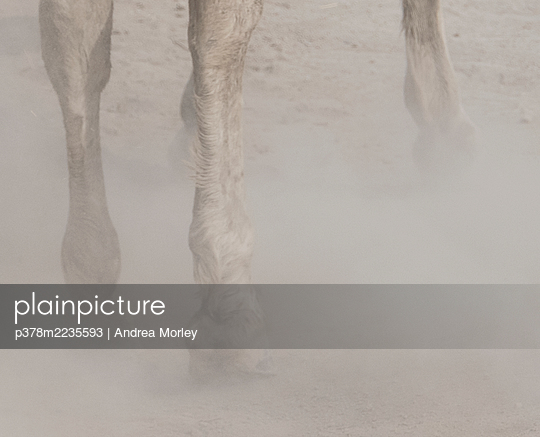 Horses legs - p378m2235593 by Andrea Morley