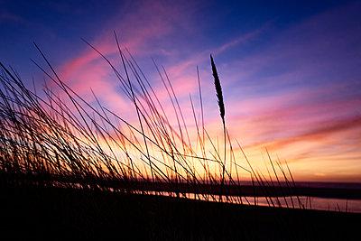 Dünenlandschaft bei Sonnenuntergang - p1203m1578231 von Bernd Schumacher