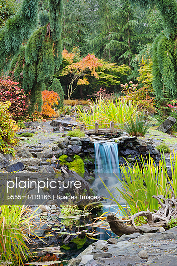 Autumn leaves on bushes around waterfall feature in landscaped garden - p555m1419166 by Spaces Images