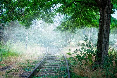 Railway tracks in the fog - p1275m2116281 by cgimanufaktur