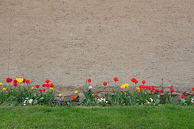 Front garden - p627m1035357 by Christian Reister