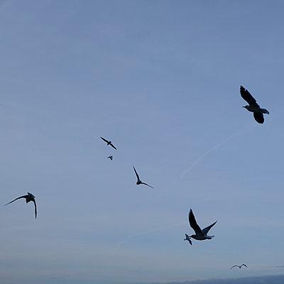 Birds in flight - p1105m2125120 by Virginie Plauchut