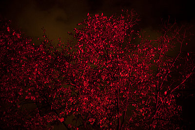 Tree at red light - p1135m943536 by Eugeni Gay Marin
