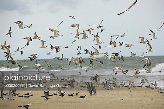 Flock of seagulls flying on sea shore
