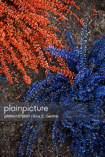 Gefärbte Pflanzen - p580m1572601 von Eva Z. Genthe