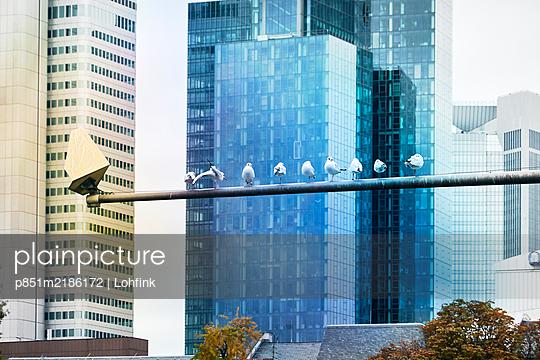 Germany, Frankfurt, High rise buildings - p851m2186172 by Lohfink