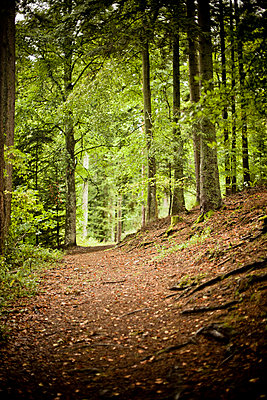 Forest path - p4451285 by Marie Docher