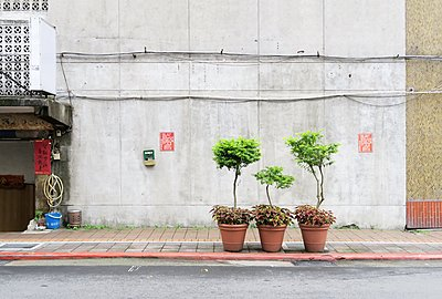 Potted plants in the street - p237m1286516 by Thordis Rüggeberg