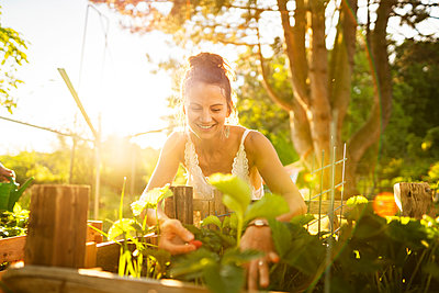 Young woman picking up strawberries in garden at sunrise - p300m2264575 by Annika List