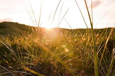 Graslandschaft auf Sylt - p432m1189776 von mia takahara