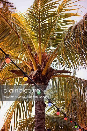Lichterkette vor Palme  - p045m1564164 von Jasmin Sander