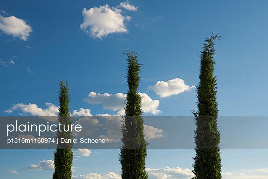 Zypresse und blauer Himmel, Toskana, Italien - p1316m1160974 von Daniel Schoenen