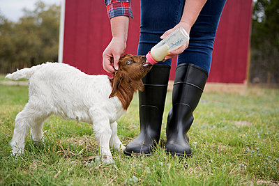 A girl bottle feeding a baby goat.  - p1100m923412f by Norah Levine