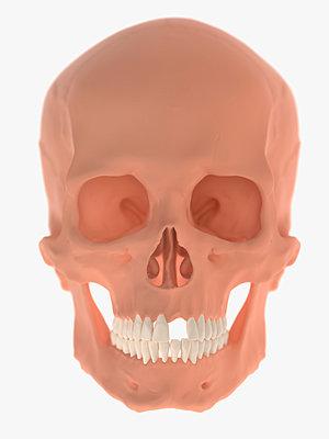 Skull - p1275m2135130 by cgimanufaktur