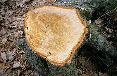 Forest dieback - p2650530 by Oote Boe