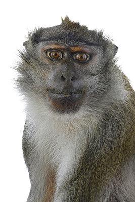 Baboon - p342m970621 by Thorsten Marquardt