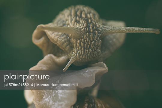 p1578m2158214 by Marcus Hammerschmitt