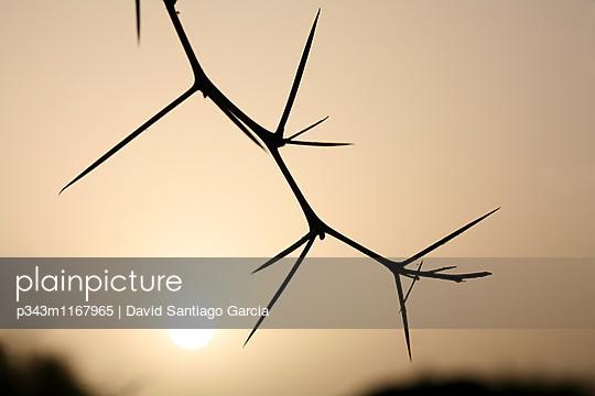 p343m1167965 von David Santiago Garcia