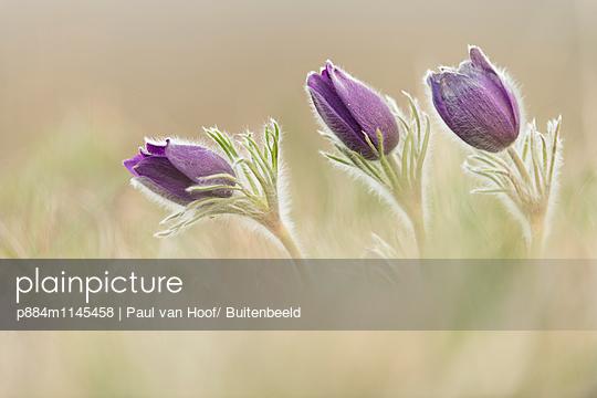 p884m1145458 von Paul van Hoof/ Buitenbeeld