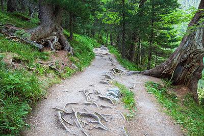 Footpath amidst trees growing at Tatra National Park - p1166m1571101 by Cavan Social