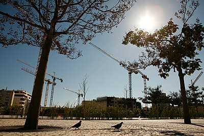 Pigeons on deserted square - p1270m1106522 by Christophe Deschanel