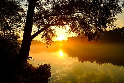 Morgenstimmung am Ennsfluss bei Enns - p1463m2292033 von Wolfgang Simlinger