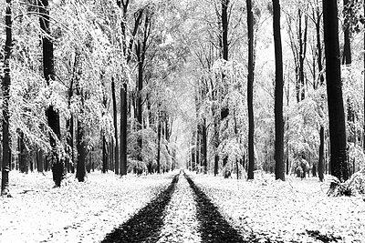 Winter forest - p1696m2294522 by Alexander Schönberg