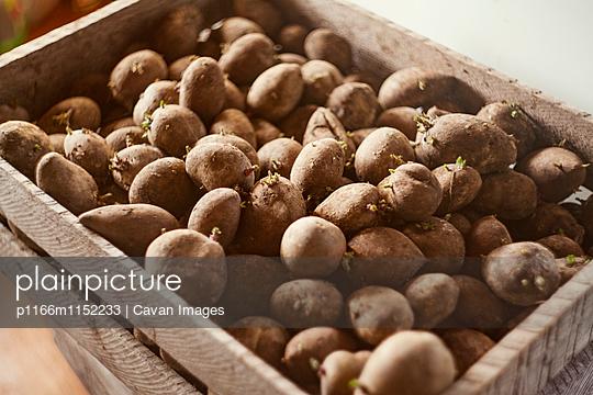p1166m1152233 von Cavan Images