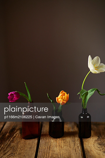 Tulips with green leaves in a vase. Modern floral simple design - p1166m2106225 by Cavan Images