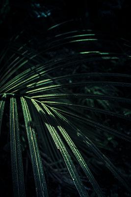 Licht und Schatten auf Palmblättern - p1255m1574982 von Kati Kalkamo