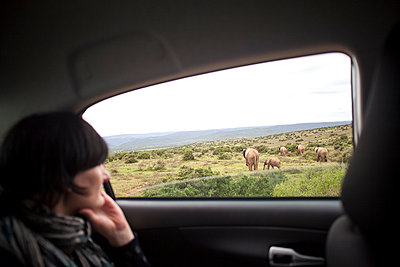 National Park, South Africa - p075m1025504 by Lukasz Chrobok