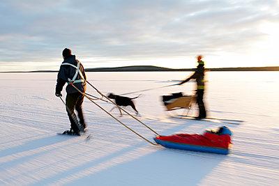 Woman dog sledding and man ice skating - p575m1074530f by Fredrik Ludvigsson