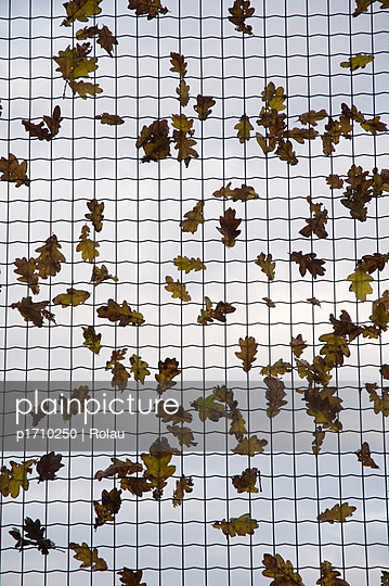 Wind is blowing leaves around - p1710250 by Rolau