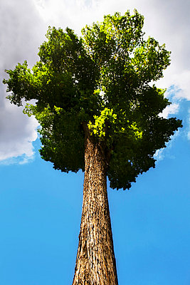 Deciduous tree - p4424692f by Design Pics