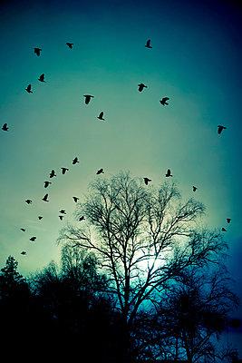 Vögel - p965m938480 von VCreative