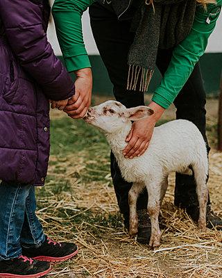 Feeding of goatling - p1184m1222706 by brabanski