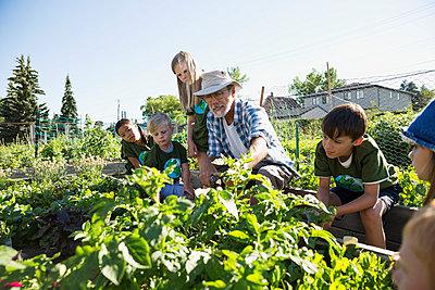 Garden expert teaching kids in sunny garden - p1192m1052133f by Hero Images