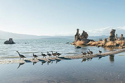 Mono Lake - p1507m2020558 by Emma Grann